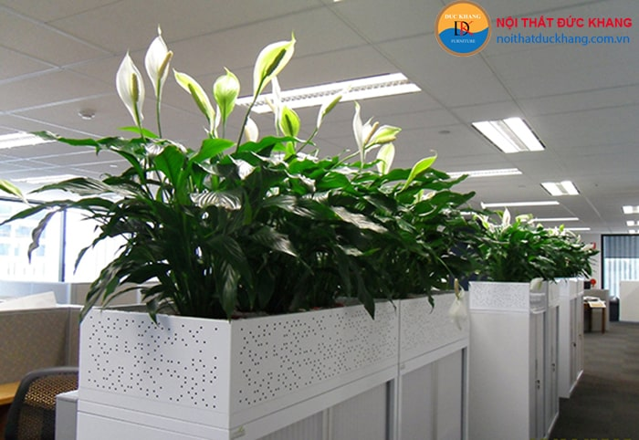 Bố trí cây xanh trong không gian làm việc
